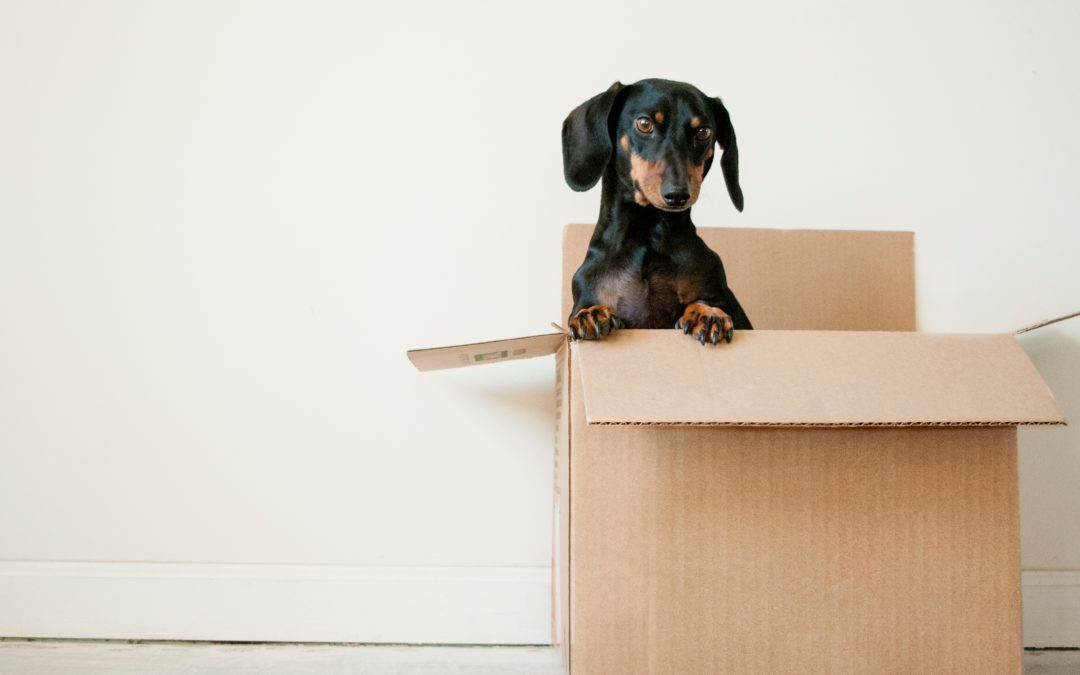7-Essential Moving Tips
